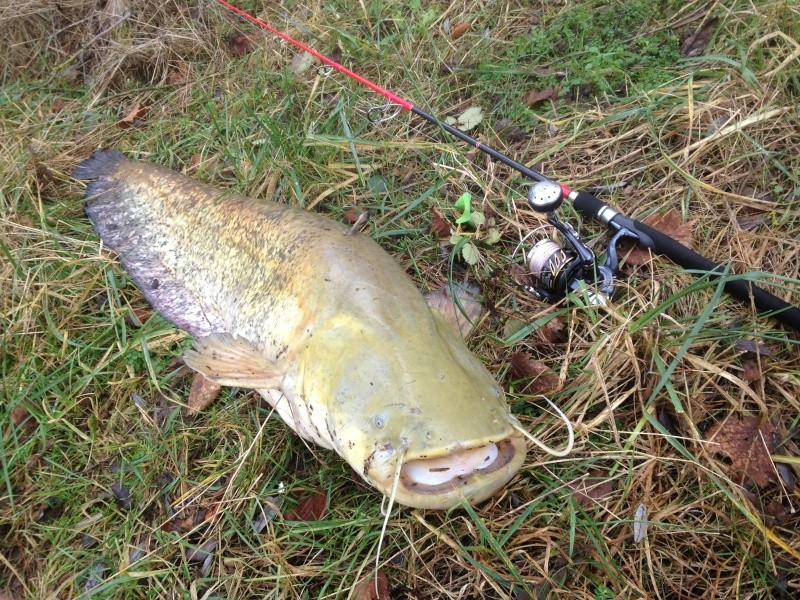 Vos sorties de pêche en Janvier 2015 - Page 2 Img_3510