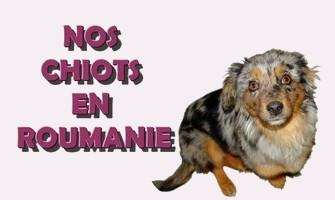 Association Remember Me France : sauver et adopter un chien roumain Bouton14