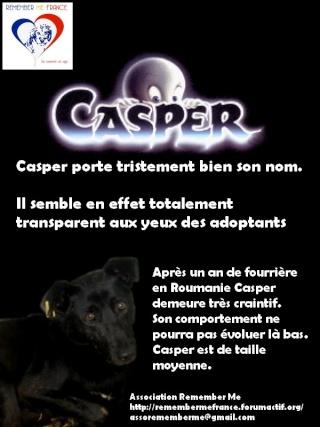 CASPER - Mâle croisé de taille moyenne, né environ octobre 2009 (PASCANI) - adopté par Marie-Blanche (57) Casper11
