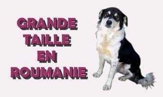 Association Remember Me France : sauver et adopter un chien roumain Grande13