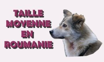 Association Remember Me France : sauver et adopter un chien roumain Moyter10