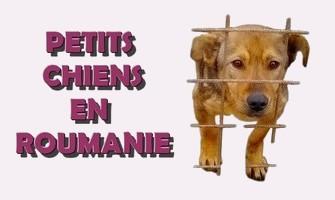 Association Remember Me France : sauver et adopter un chien roumain Petits14