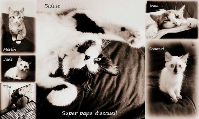 BIDULE (Hairy) et CRAPULE (Sweetie) - Page 6 Img_8610
