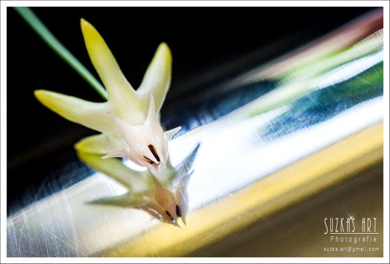 Sunnies Hoyabilder Pk5c8911