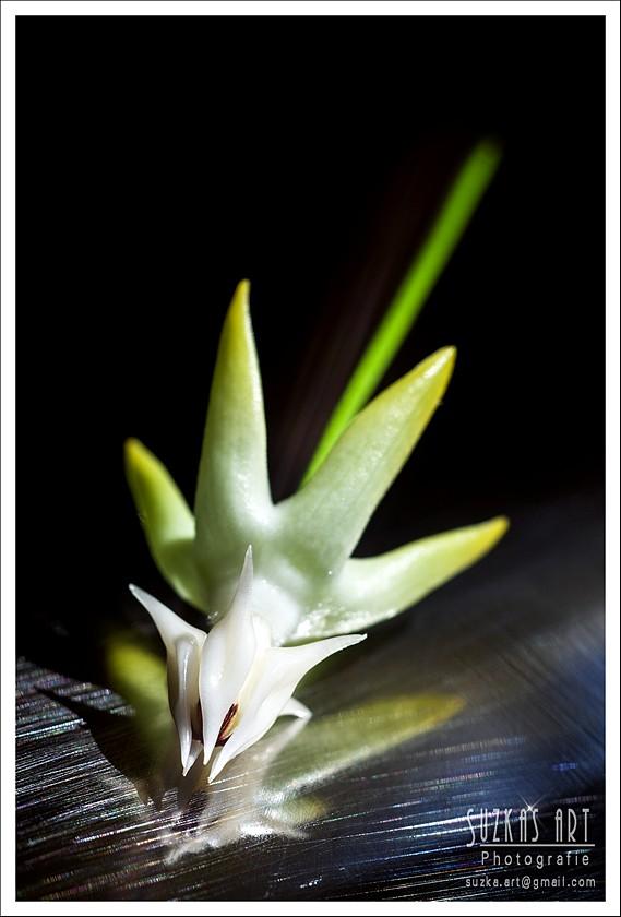Sunnies Hoyabilder Pk5c8913