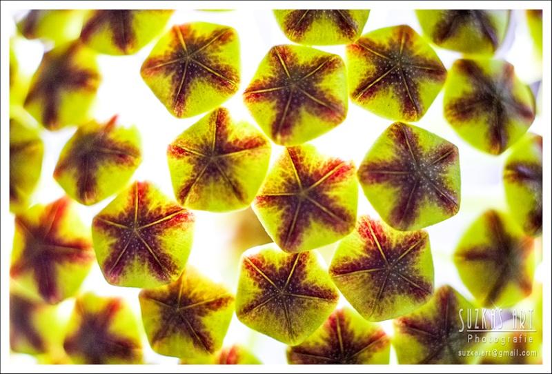 Sunnies Hoyabilder Pk5c9214