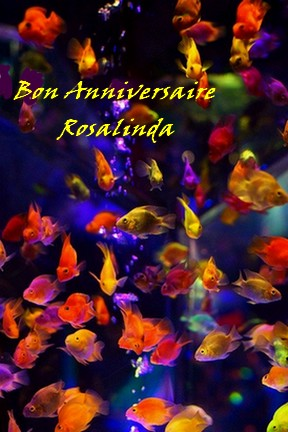 Bon anniversaire ROSALINDA ! Rosa10