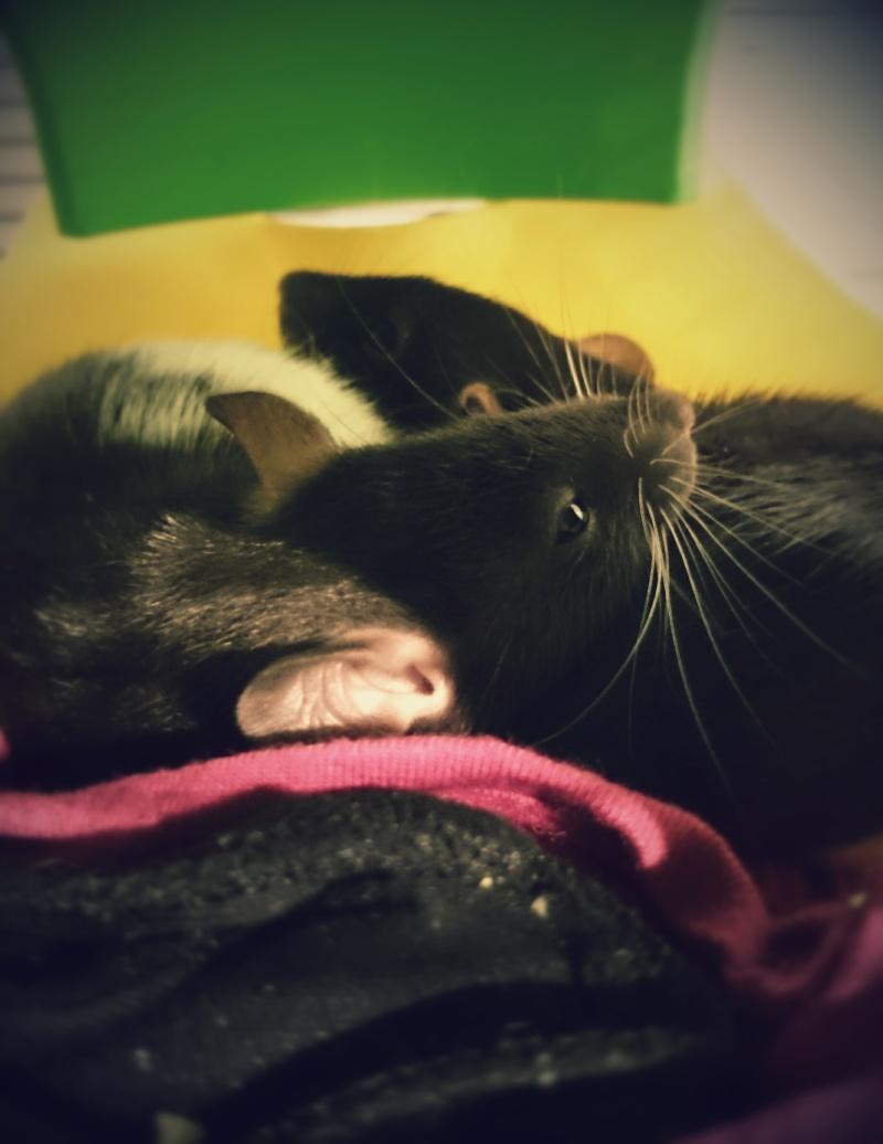 Mes deux pupuces <3 2015-011
