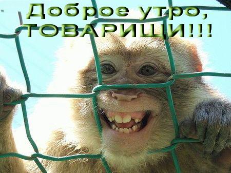 Доброе утро,день,вечер:)))))))) - Страница 6 11910410