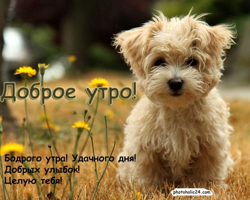 Доброе утро,день,вечер:)))))))) - Страница 6 55098510