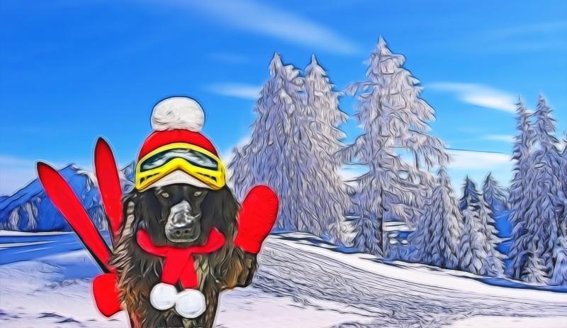 urgent montage chien skieur, merci !! 15010_10