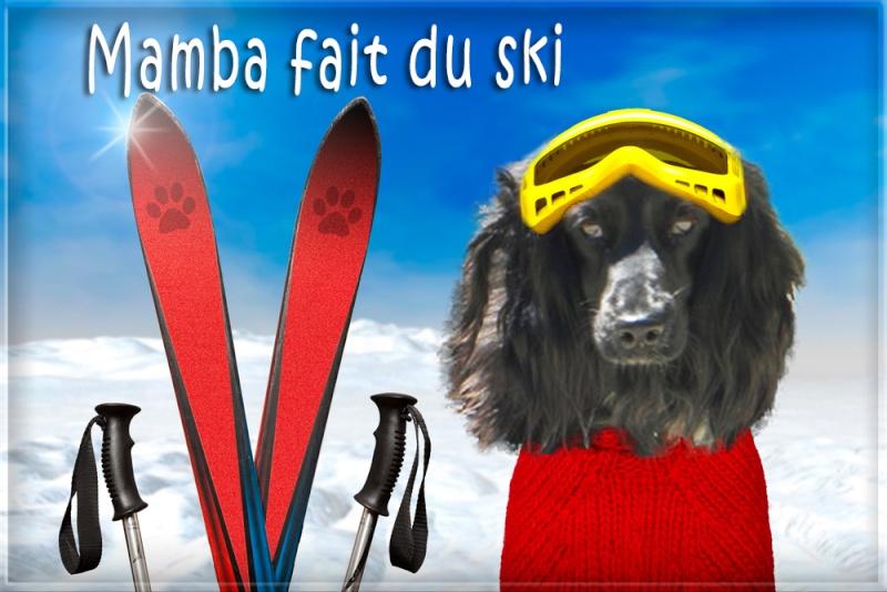 urgent montage chien skieur, merci !! Shutte11