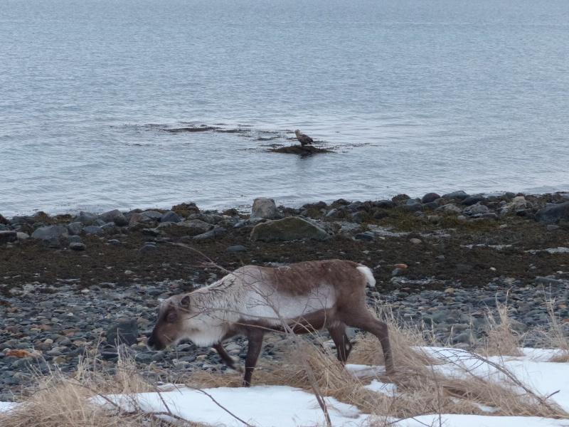 Chasse aux aurores à Tromso P1030510