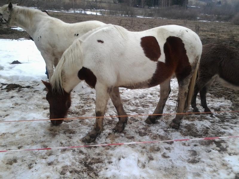 CALINOU  - ONC poney - né en 1999 - adopté en novembre 2012 par Stéphanie - Page 6 Photo311