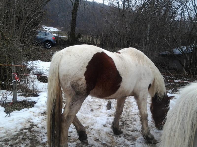 CALINOU  - ONC poney - né en 1999 - adopté en novembre 2012 par Stéphanie - Page 6 Photo411