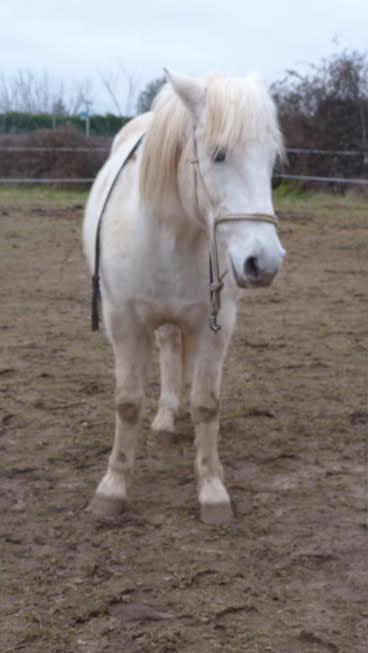 OSCO - Camargue PP né en 2002 - Adopté en mars 2012 par Anaïs  Unname65