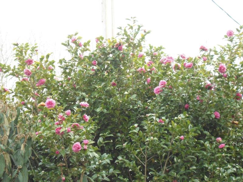 bouture de plants ..................... - Page 2 Debbie10