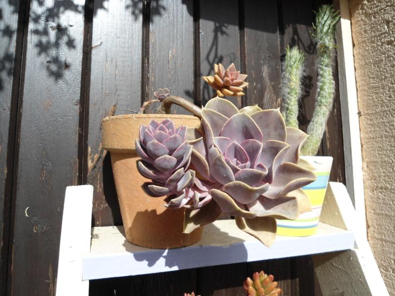 voila quelque plantes qui adore le soleil ..un début de collections ..... Denise17
