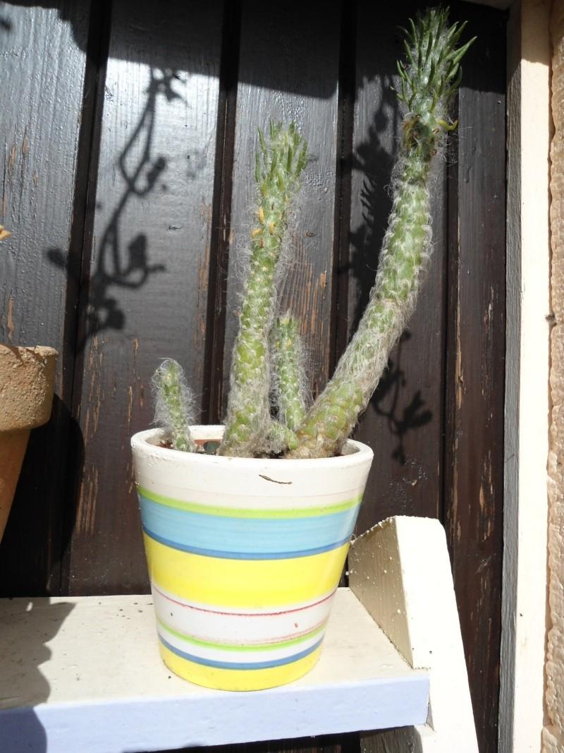voila quelque plantes qui adore le soleil ..un début de collections ..... Denise18