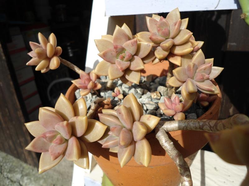 voila quelque plantes qui adore le soleil ..un début de collections ..... Denise21