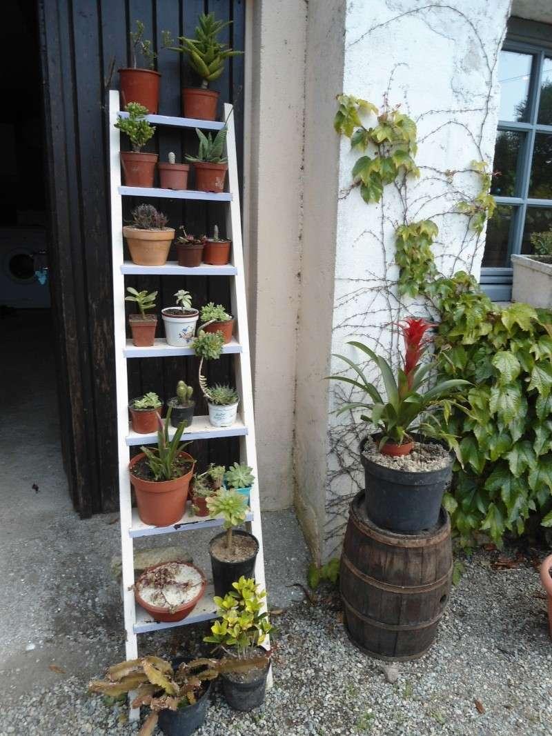 voila quelque plantes qui adore le soleil ..un début de collections ..... Denise27
