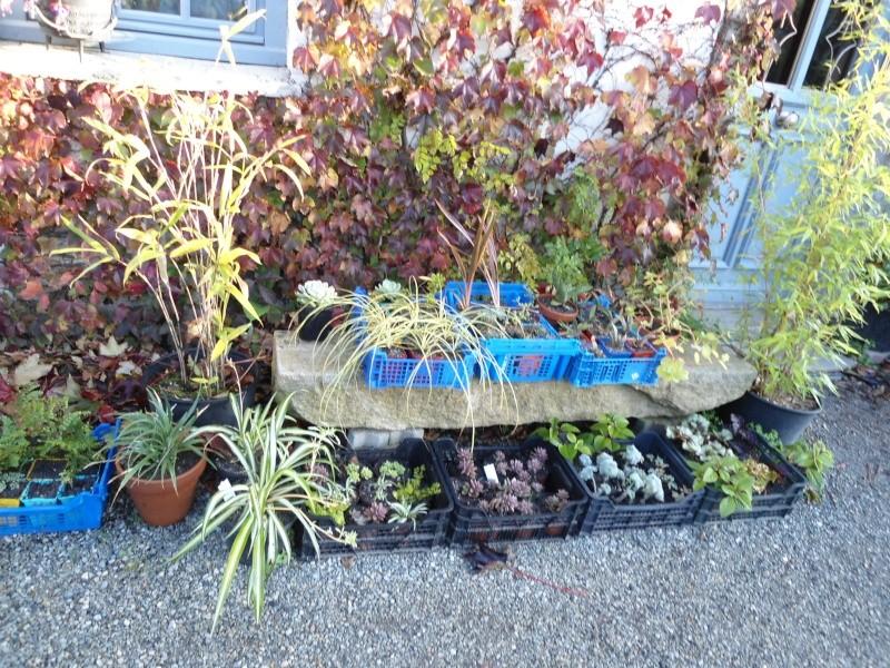 bouture de plants ..................... Denise35