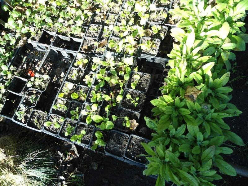 bouture de plants ..................... Denise36