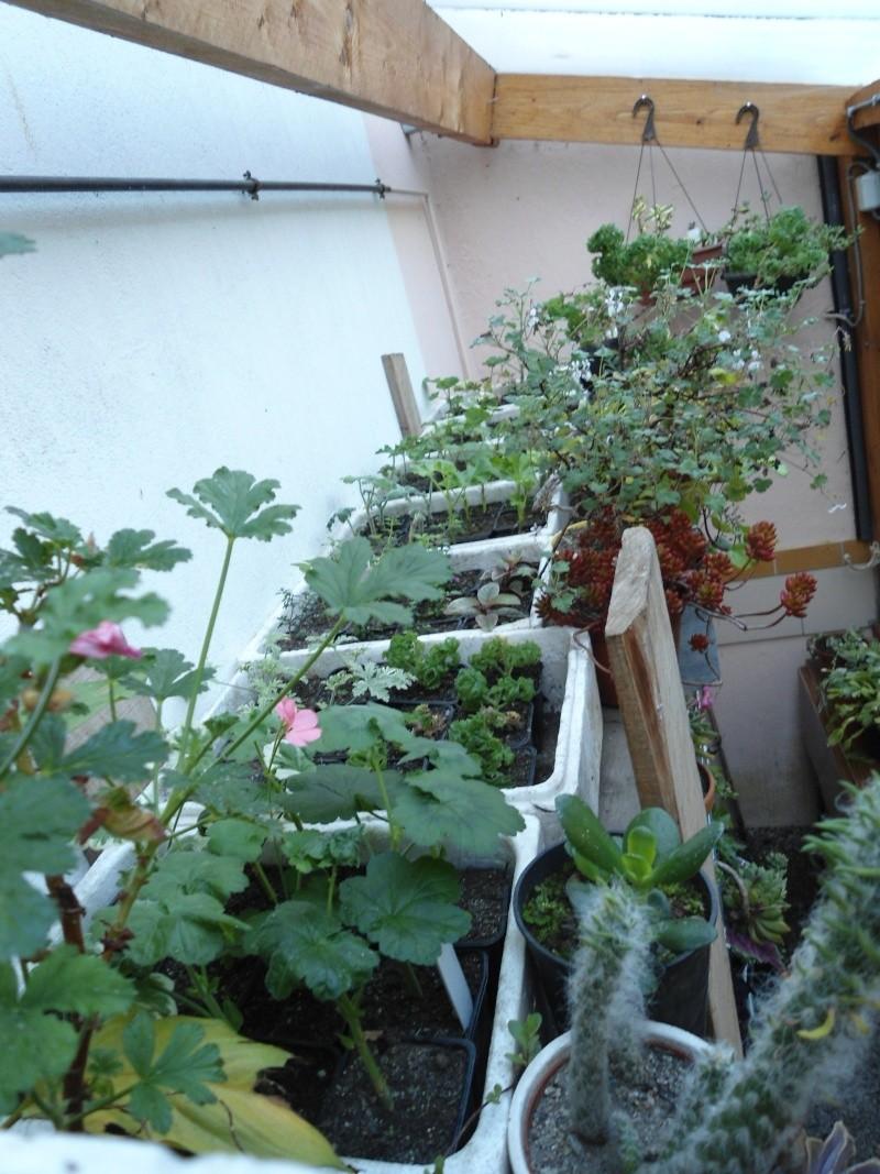bouture de plants ..................... Denise38