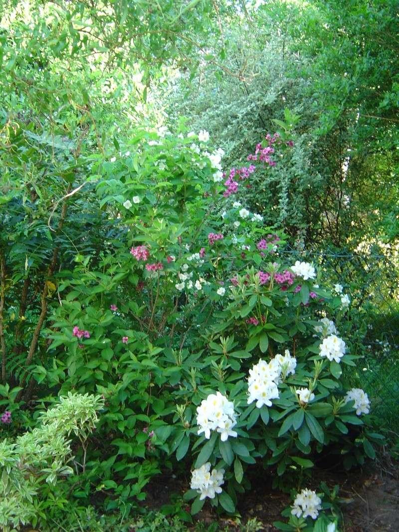 les  végélias de mon jardin  Dsc00311