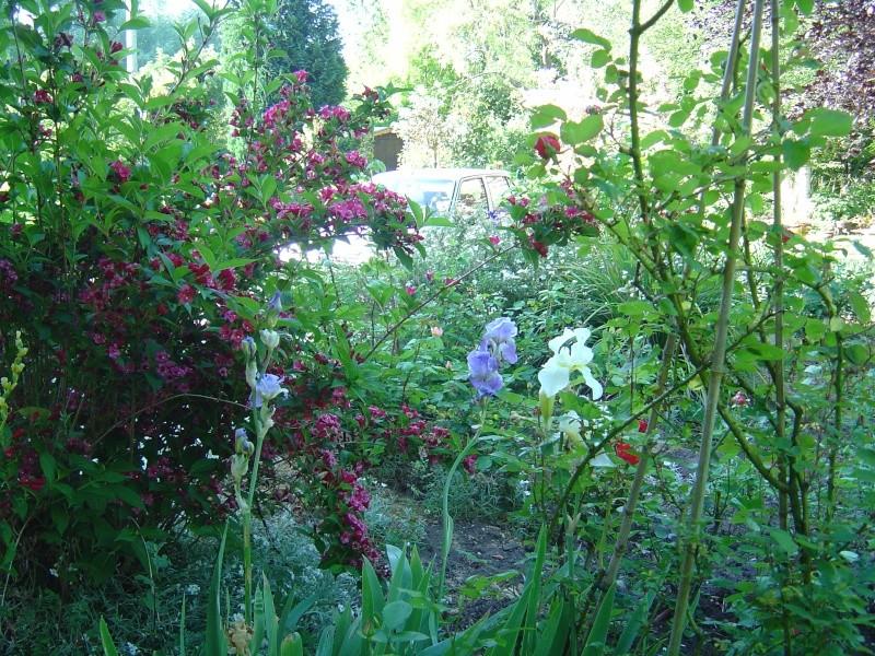 les  végélias de mon jardin  Dsc00312