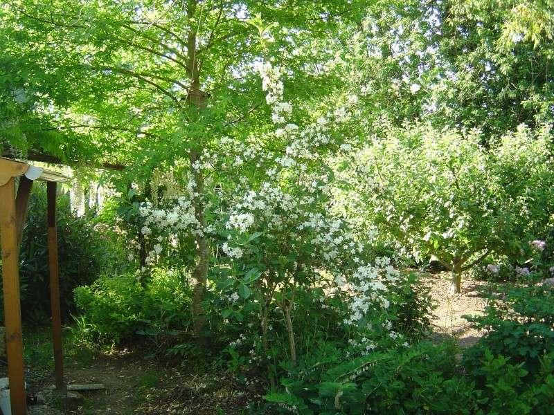 les  végélias de mon jardin  Dsc00313