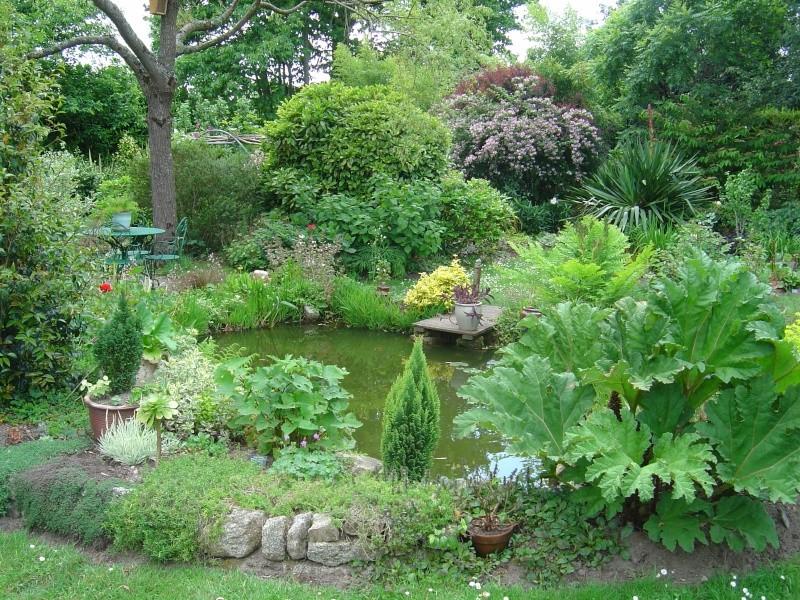 bassins fleuris  et poissons  Dsc00315