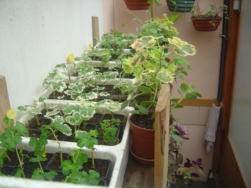 bouture de plants ..................... Dsc01210
