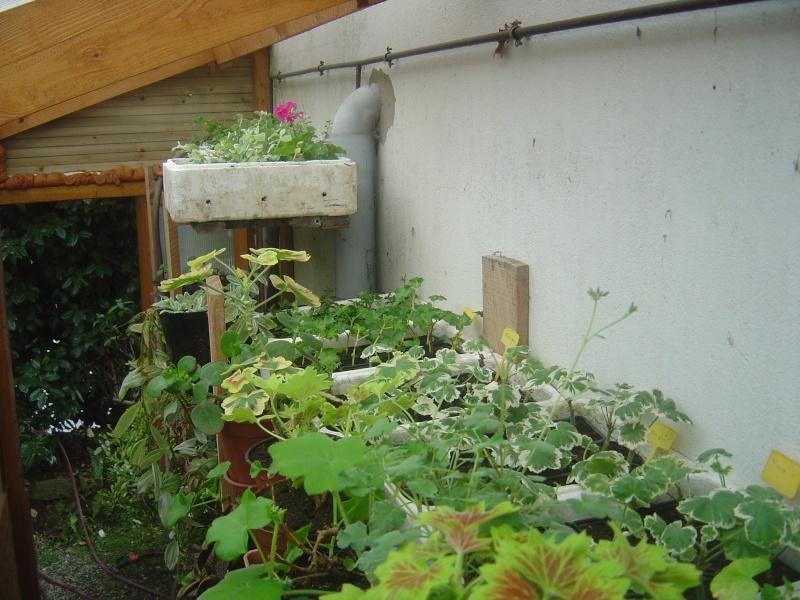 bouture de plants ..................... Dsc01211