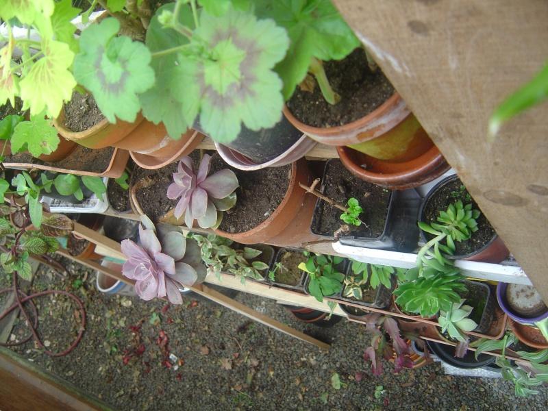 bouture de plants ..................... Dsc01212