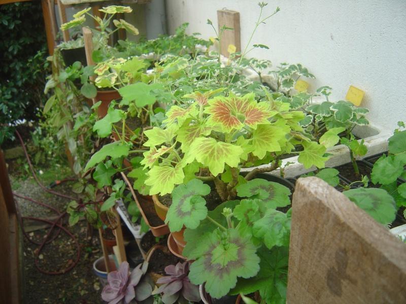 bouture de plants ..................... Dsc01214