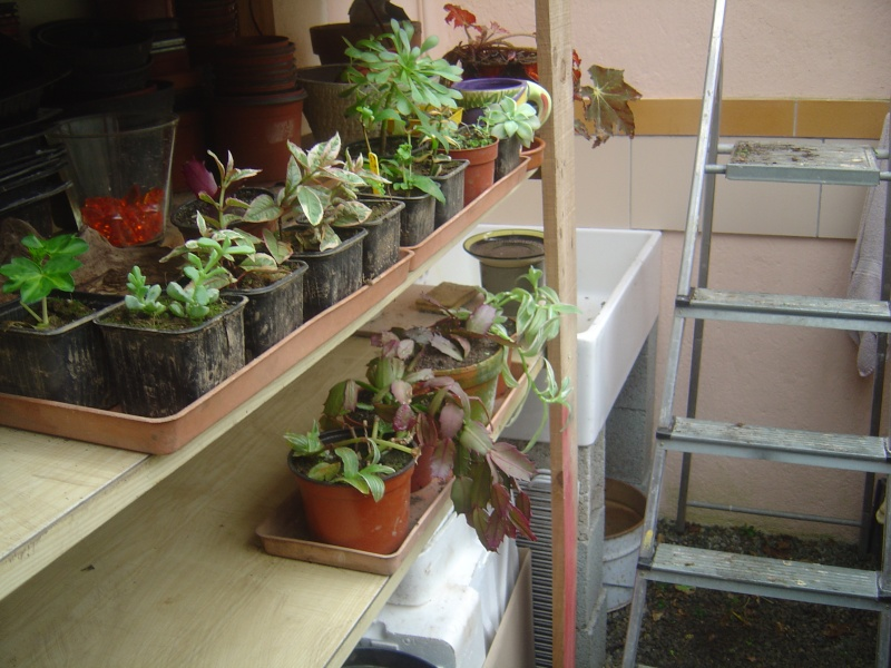 bouture de plants ..................... Dsc01215