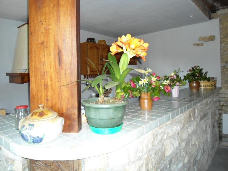 plantes d'intérieur  Hhhhhh11