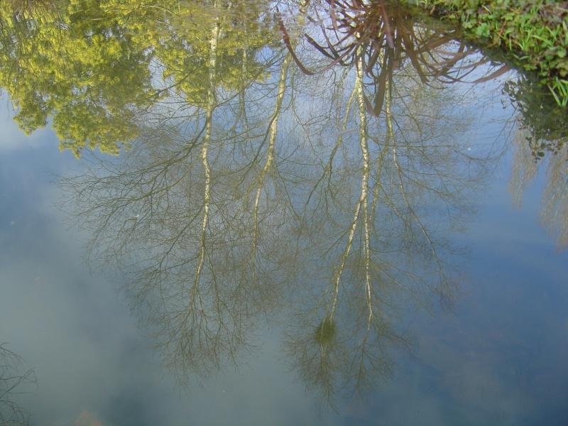 bassins fleuris  et poissons  Jardin41