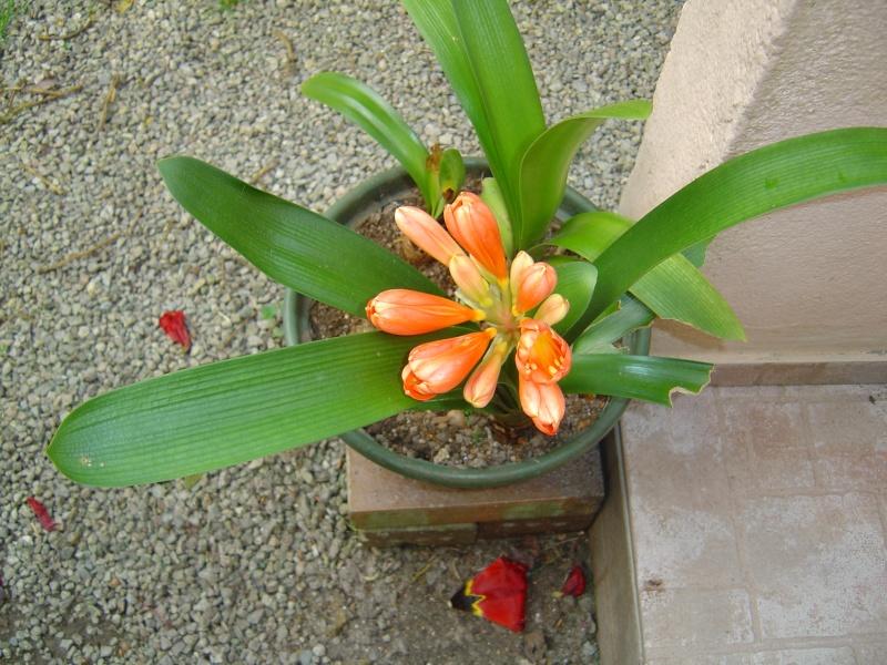 plantes d'intérieur  Jardin60