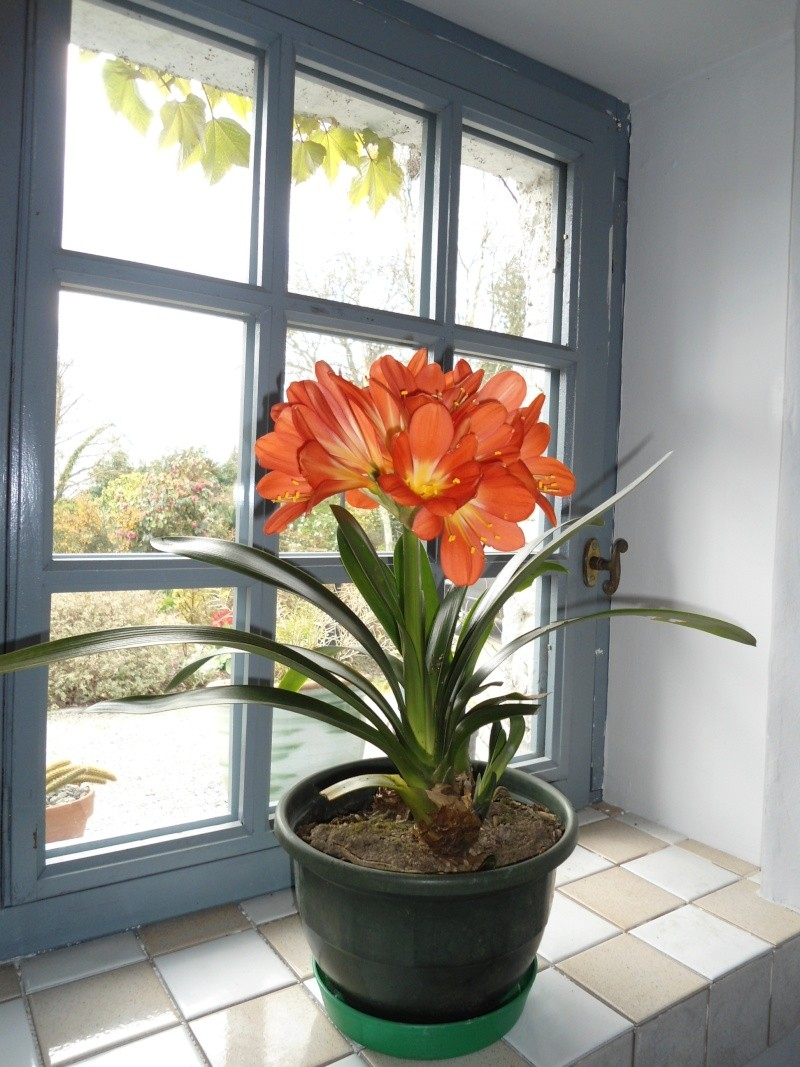 plantes d'intérieur  Jardin61