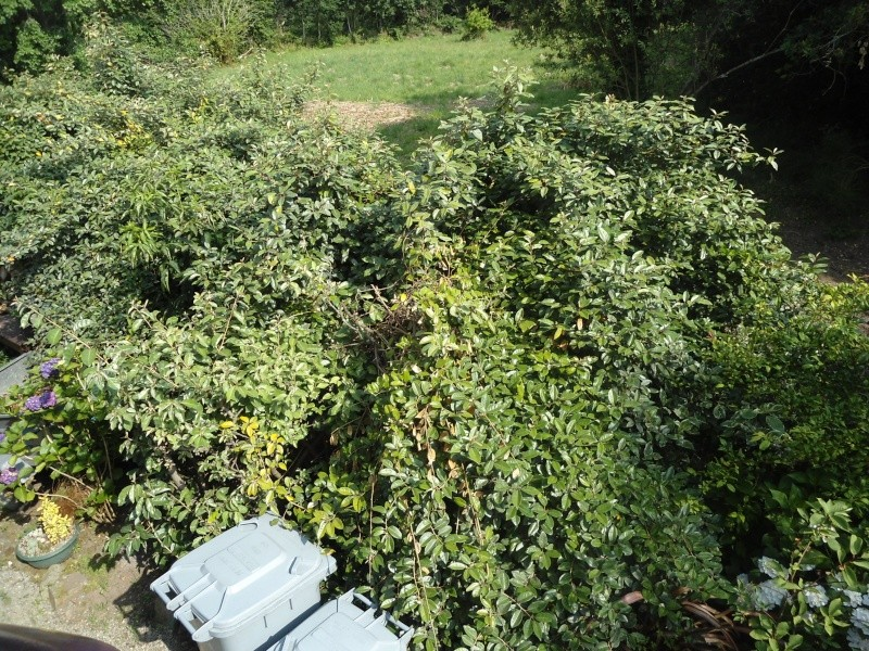 bouture de plants ..................... - Page 2 Le_17_13