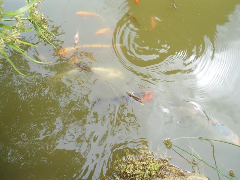 bassins fleuris  et poissons  - Page 4 Le_26_14