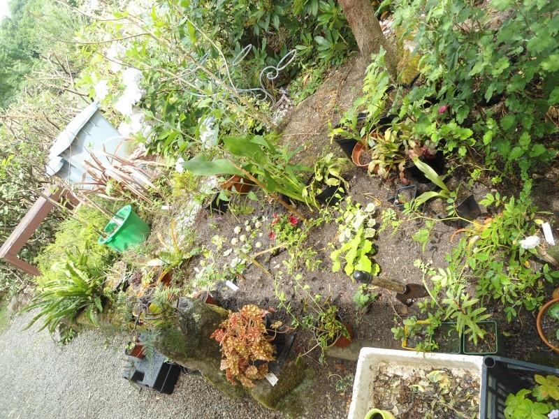 bouture de plants ..................... - Page 4 Le_26_15