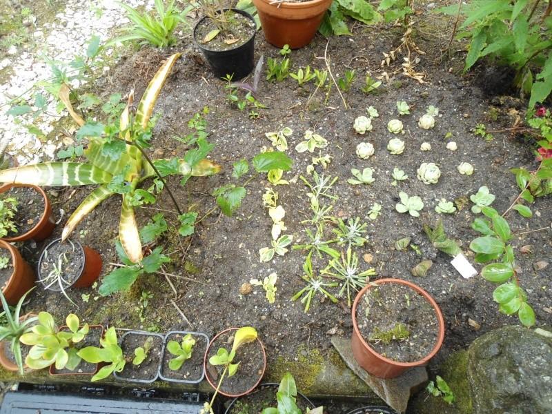 bouture de plants ..................... - Page 4 Le_26_17