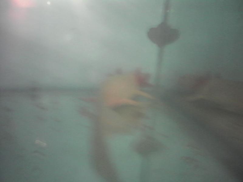 axolotl Img_2010