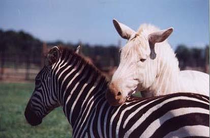 Pensé etre zebre mais testé sans rayures? Que peut il y avoir derrière? Jlu3ap10