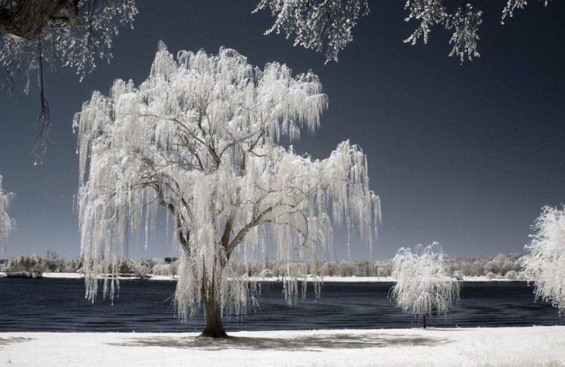 Nature 10906111