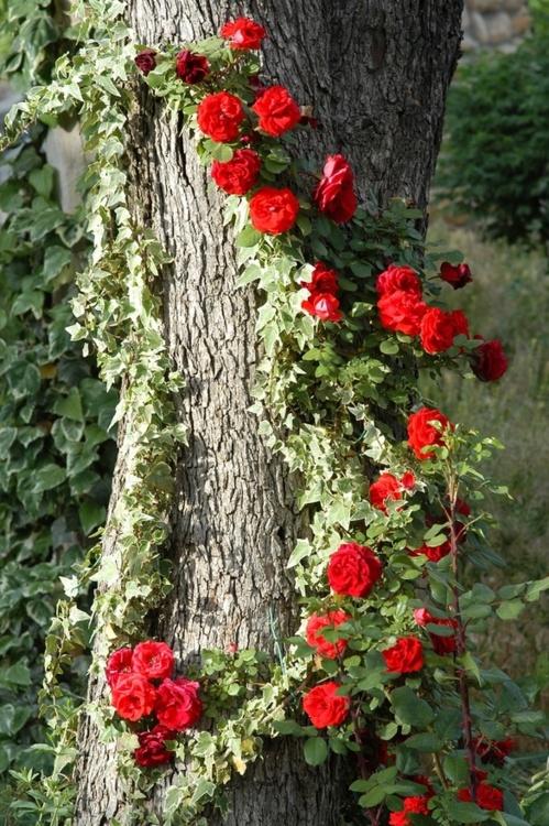 Nature 3a592d10