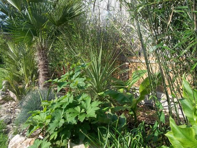 bambou paradis du 80 101_1633